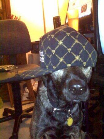 Собаки-гангстеры