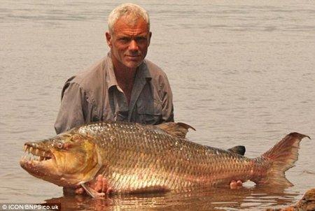 Большая пиранья или смесь рыбы с крокодилом?