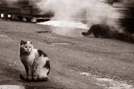 Минчане отказываются от домашних животных