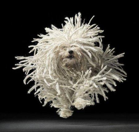 Портреты собак