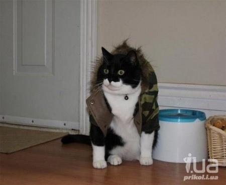 Татарскую кошку-наркокурьера загрызла служебная собака