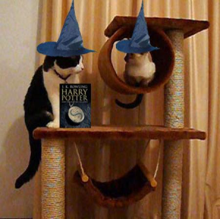Звери-волшебники