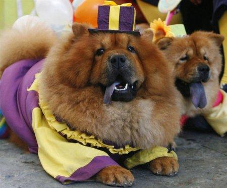 Зверюшки в нарядах на Хеллоуин