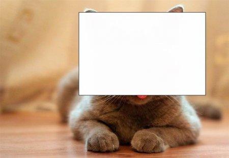 Котенок, похожий на идиота