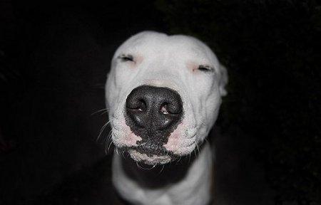 Собаки укурки