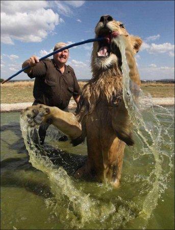 Киска любит купаться!