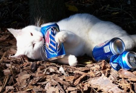 Коты-алкоголики