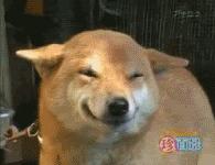 Собаки-наркоманы