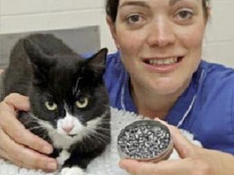 Кошка Терминатор выжила после обстрела из винтовки и ДТП