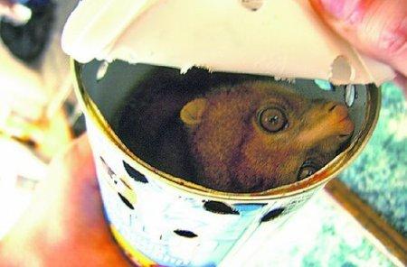 Самая необычная контрабанда: лемуры в консерве, удав на голову и золотые гвозди