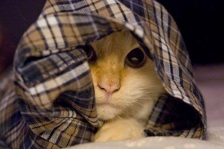 Кошаки в ночнушках
