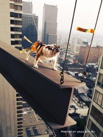 """""""Да этот пёс просто супермодель..."""" - Фотограф John Sterling Ruth"""
