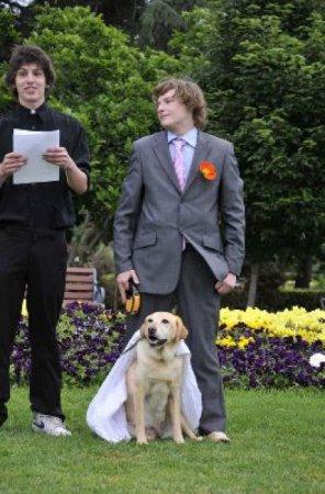 Свадьба на собаке