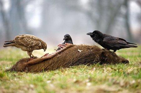Крылатые охотники