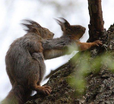 Как белки собирают орешки?