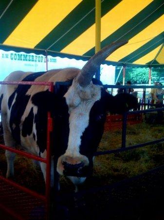 Корова - единорог