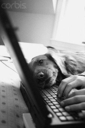 Щенки и ноутбук