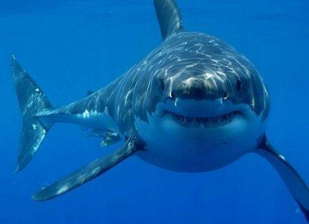 Стали известны причины нападения акул на туристов в Египте