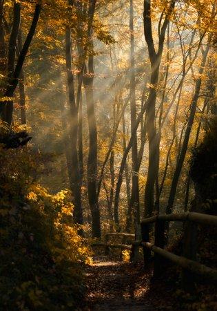 Осень... Фотограф Norbert Maier