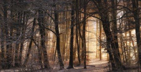 Зима... Фотограф Norbert Maier
