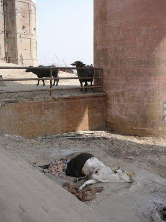 Фото-экскурс в Индию