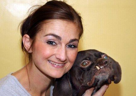 Самая уродливая собака в Британии