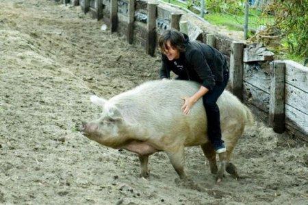 Необычные ездовые животные