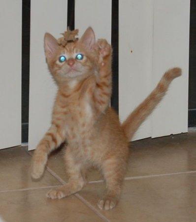Коты такие коты