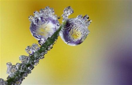 Зимняя красота: Макрофотографии снежинок и инея