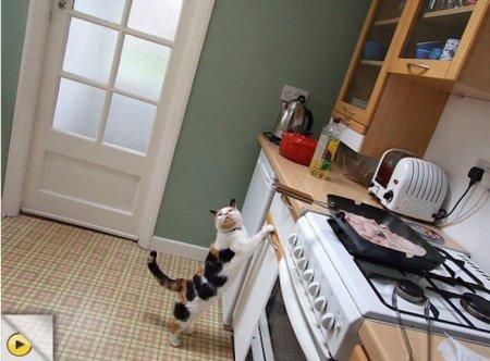 Коты, пойманные на месте преступления