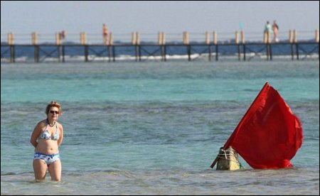 Египетских акул будут бить током по морде