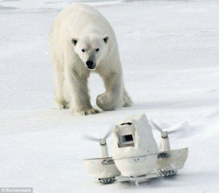Полярный медведь и камера
