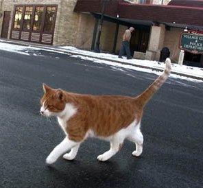 Кот – мэр города