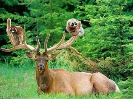 Животные сходят с ума