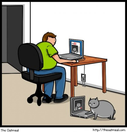 Кот и интернет