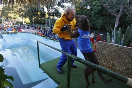Конкурс для собак на Параде Роз