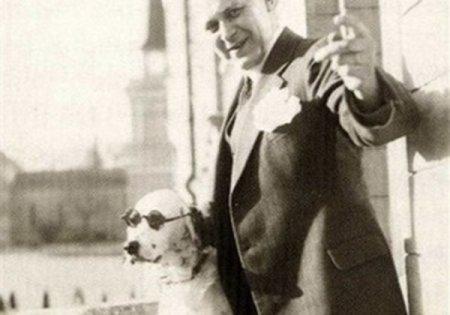 Собака-зигикидака