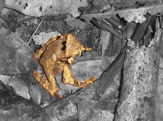 Найди лягушку