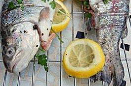 Без рыбных четвергов можно умереть
