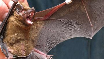 """Летучие мыши умеют """"дружить"""", считают ученые"""