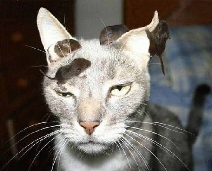 уау держать котов сфинкс это