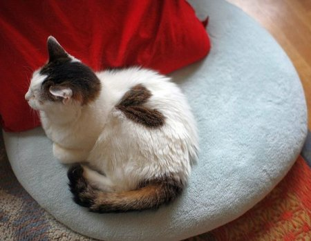 Сердечные коты