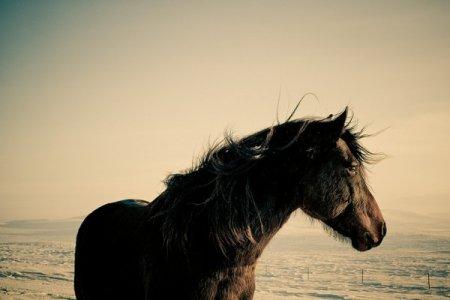 Серия Ковбои (Cowboys)... Фотограф Christopher Wilson