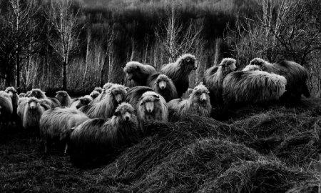 Фотограф Remus Tiplea