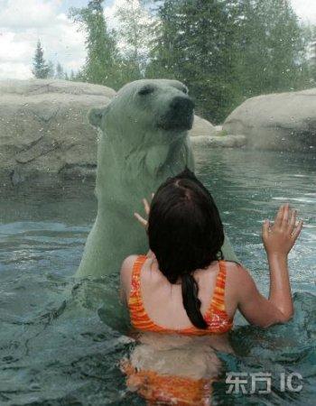 Туристы и белые медведи купаются вместе