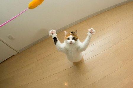 Летучие коты