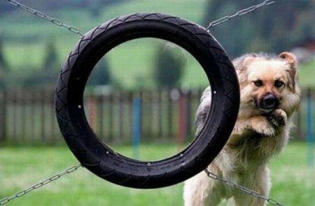 Собачьи FAILы