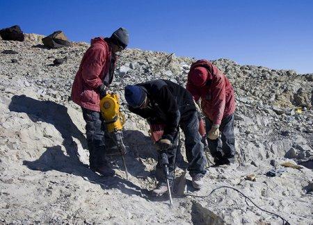 В Антарктиде найдены 190-миллионолетние останки динозавра