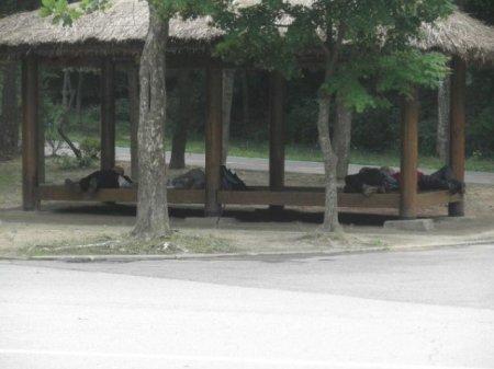 Корейские дрова
