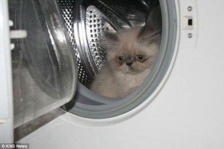 В Москве объявился «кошачий Гудини»